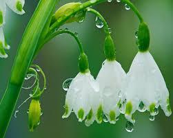 Spring Acupuncture Detox