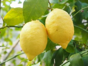 What are the benefits of essential oils, lemon