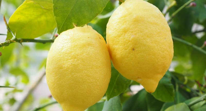 Lemon – Essential Oil of The Month