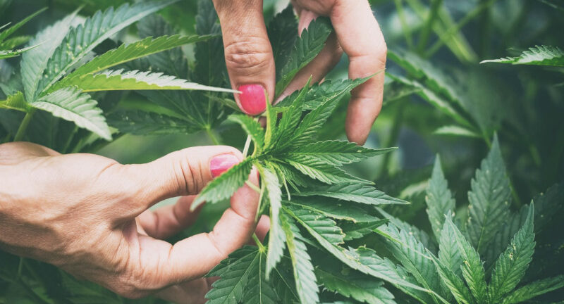 CBD all the buzz… How Can CBD increase health and wellness?